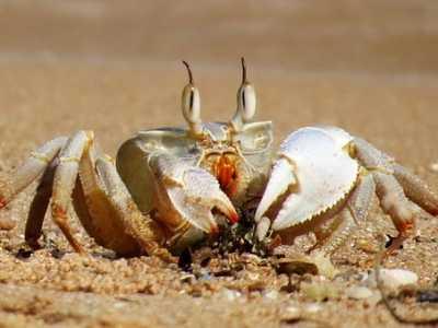 怎么做好吃 河蟹吃什么