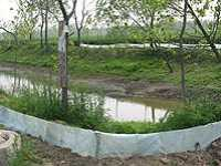 蟾蜍养殖池的建造要求 蟾蜍养殖技术