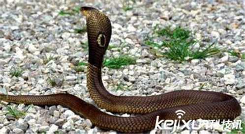 世界上最大的蛇森蚺 世界最大的蛇图片