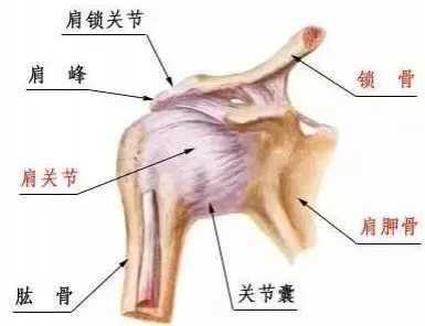 健身中常见运动损伤——肩膀总是咔咔响 肩膀的肌肉叫什么